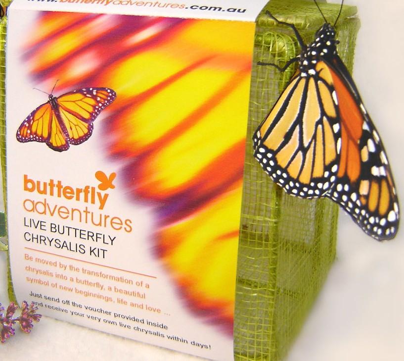 Chrysalis Kit – Butterfly Adventures